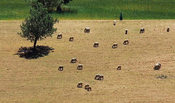 grazing *