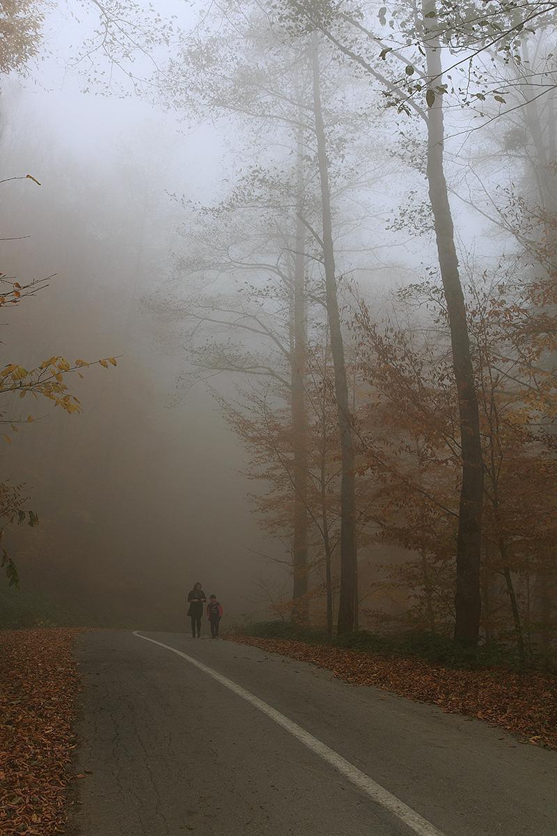 In the Fog *