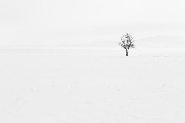 white covered