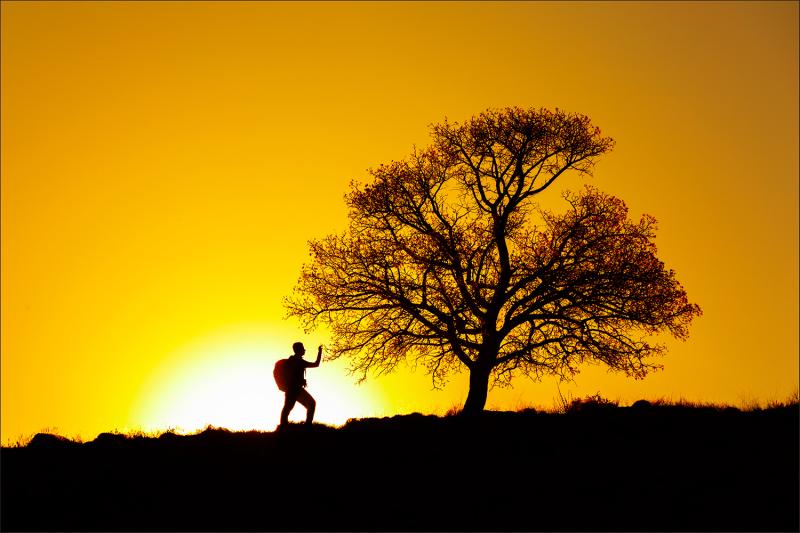 Picking hawthorn