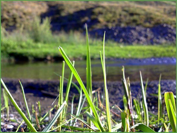 Grass & Lake