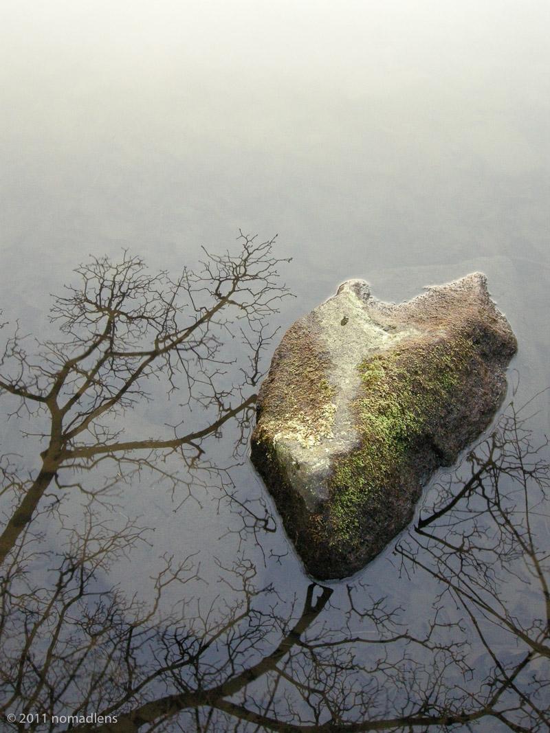 Rock & reflected tree, Ilkley Moor Tarn, W. Yorks