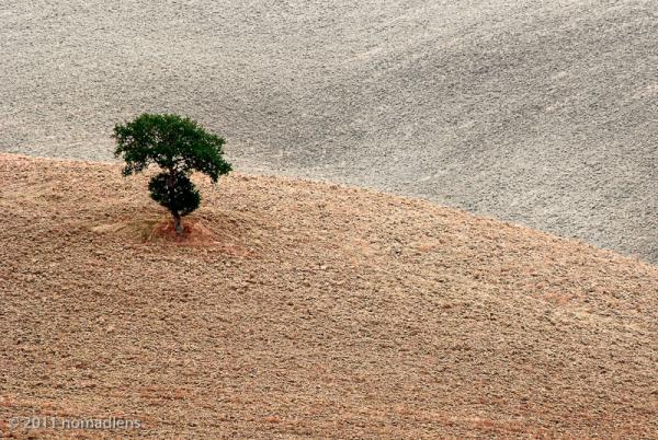 Tree, Val d'Orcia, Tuscany, Italy
