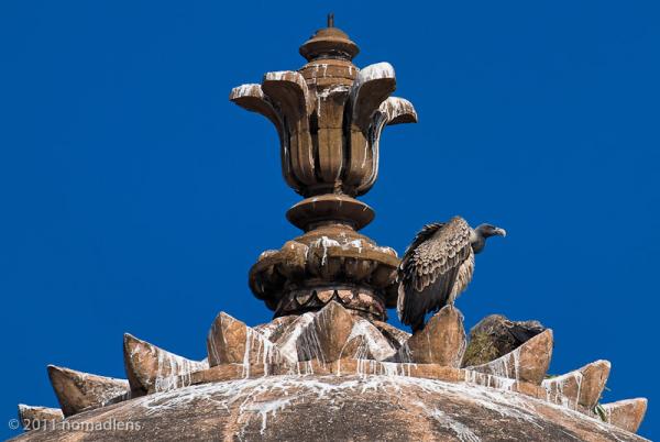 Vulture on chhatri, Orccha, Madhya Pradesh