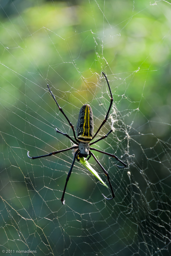 spider, Bandhavgarh, MP, India