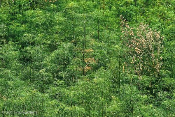 Ferns, Shilin Stone Forest, Yunnan, China