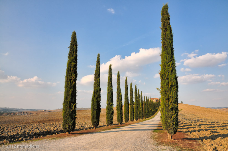 Cypress Avenue, Val D'Orcia, Tuscany, Italy
