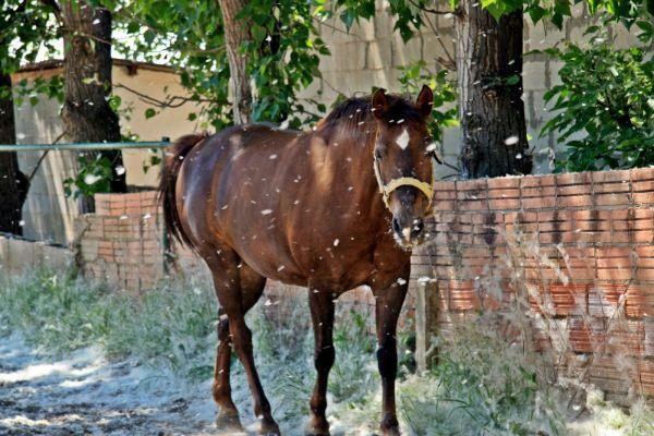 Frindship, horse, image, photo.