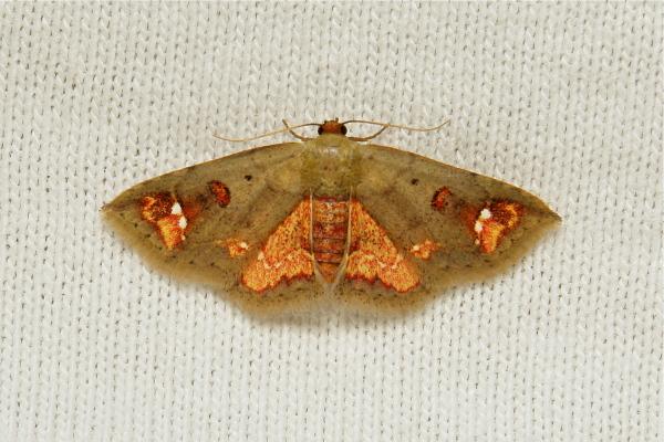 moth China Yunnan