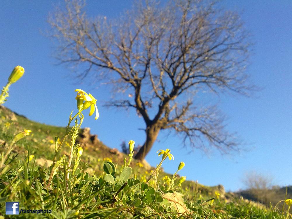flower&tree