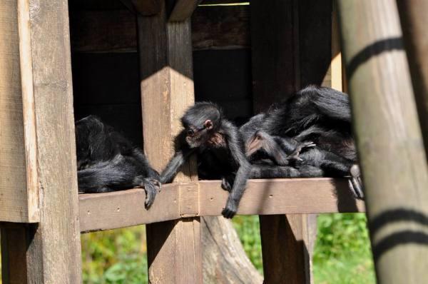 Petit, arrête de faire le singe...