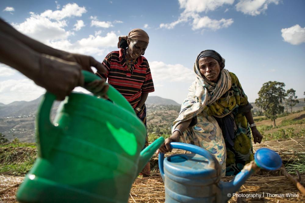 Gemechis, Ethiopia VI - Watering the seeds.