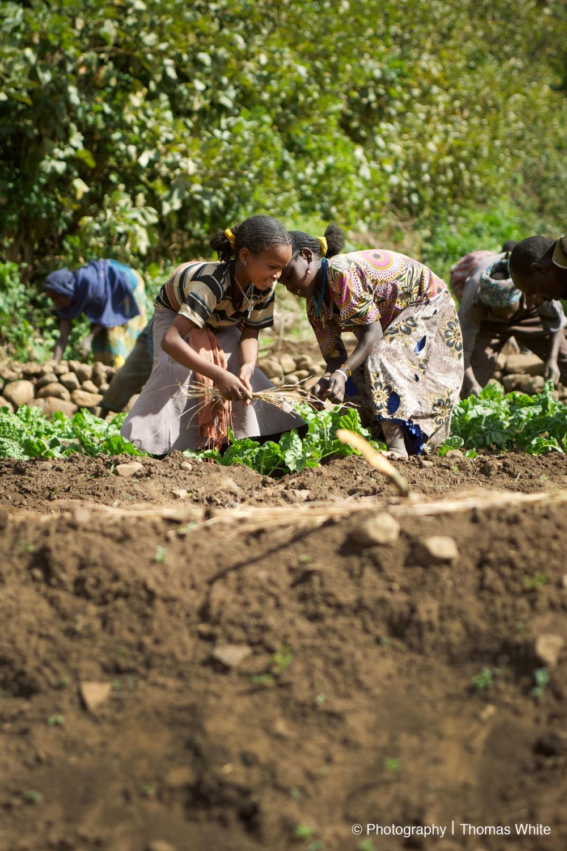 Gemechis, Ethiopia IX - Tending the seeds.