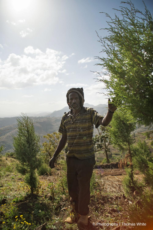 Gemechis, Ethiopia XVI
