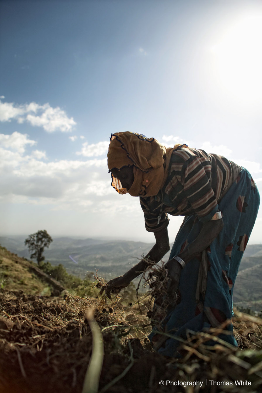 Gemechis, Ethiopia XXI