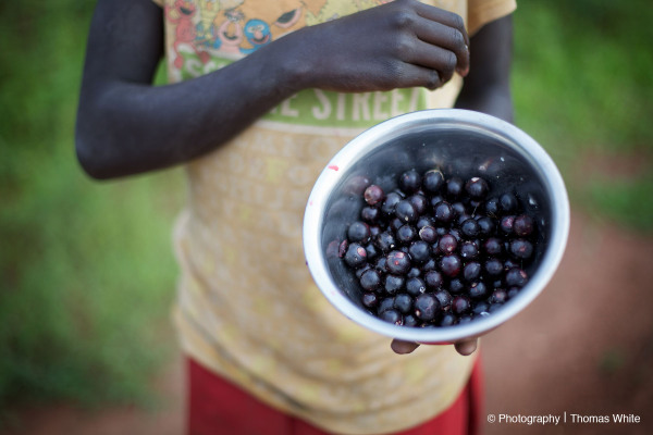 Berries, Kabong District, Northern Uganda.