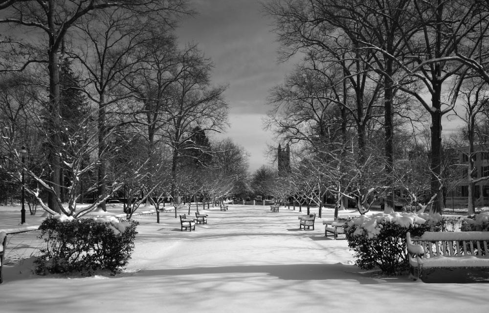 Snow in priceton