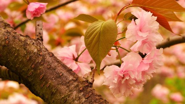 Spring - 2