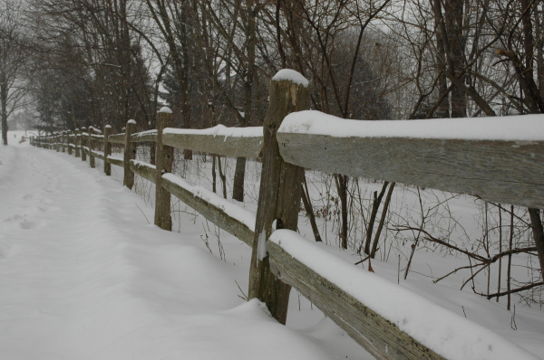 Snowy Splitrail