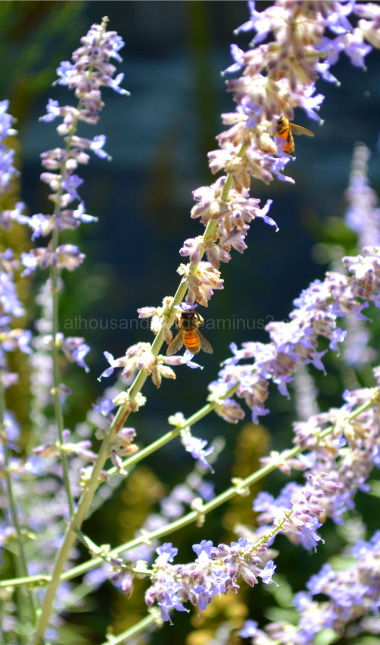 Two bees found feasting on a flower