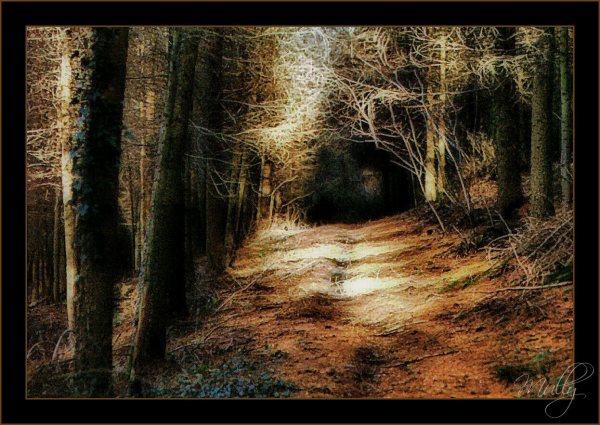 landscape woods orton effect