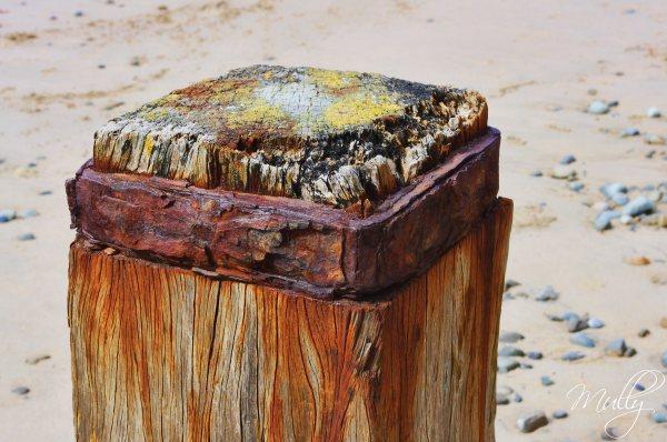 rusting groynes