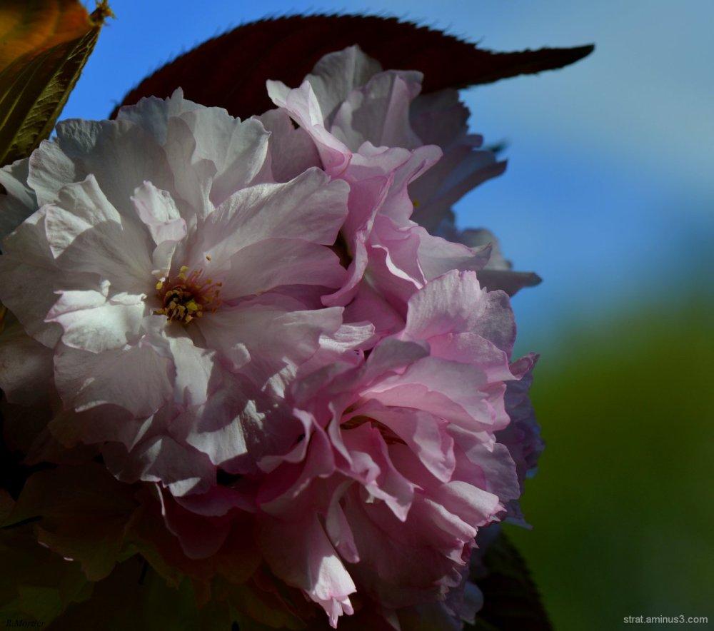 La vie en rose et blanc