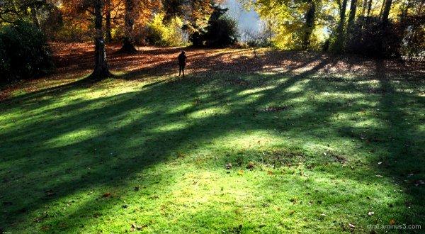 Bulles d'automne