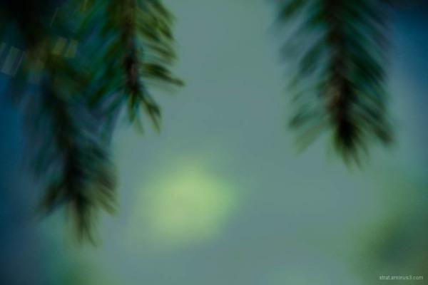 Lumière dans la brume