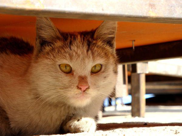 گربه ها میتوونن همه چیو ببینن