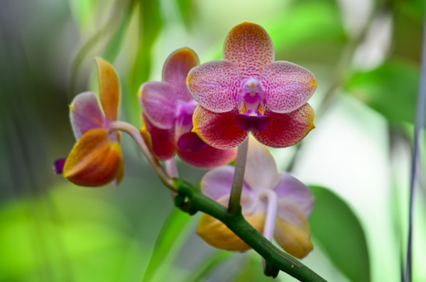Orchid #2