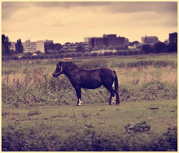 cityhorse