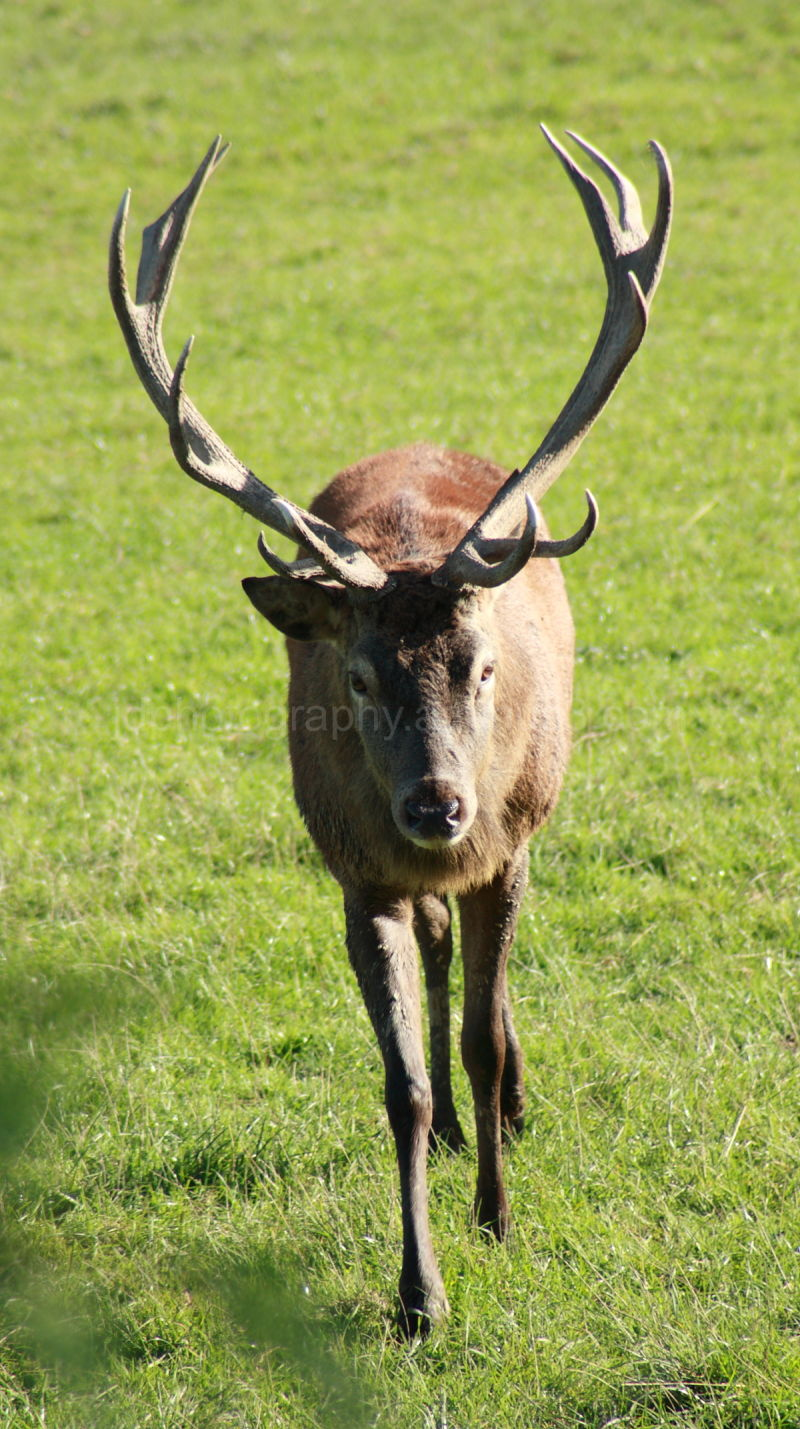 Young Buck in Wildlife Society