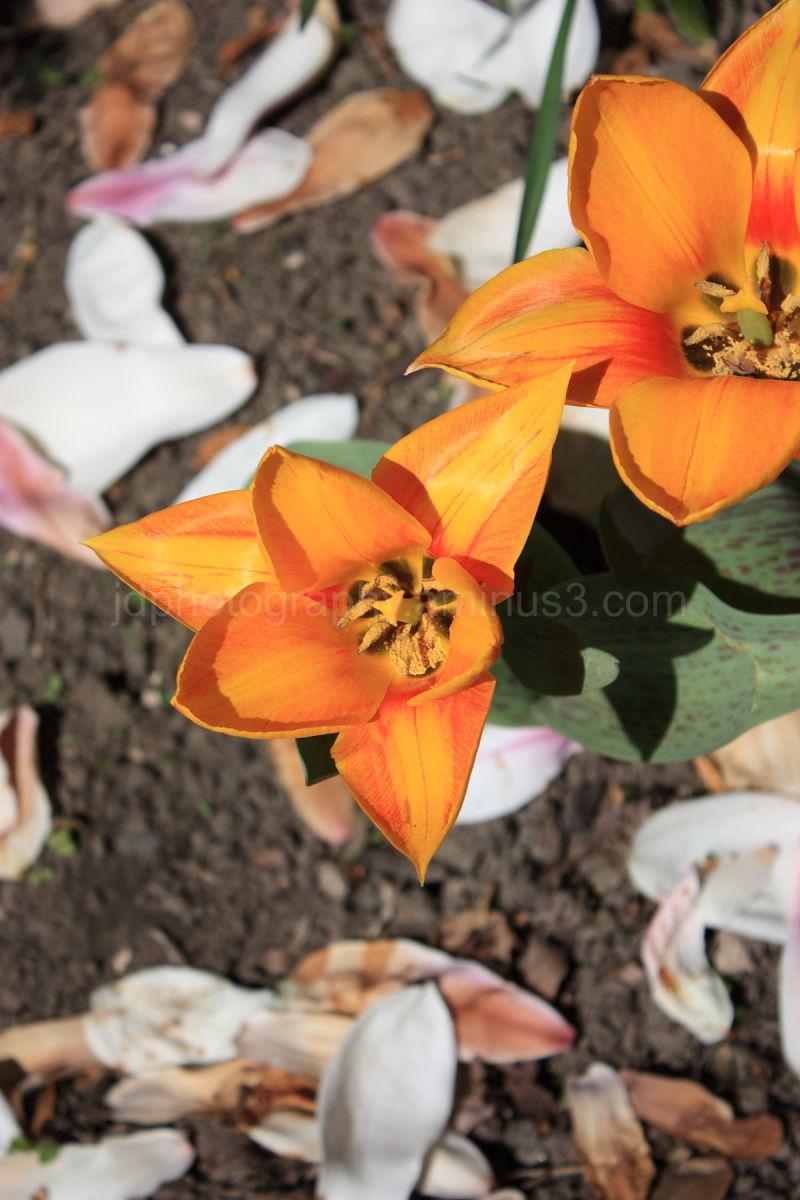 An Orange flower outside St Mary Le Strand