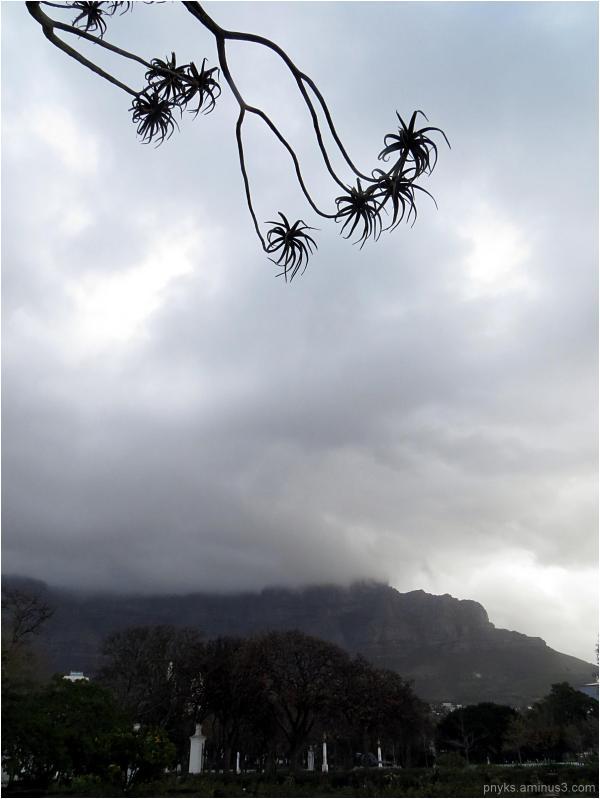 Mama Africa (8): Aloe!