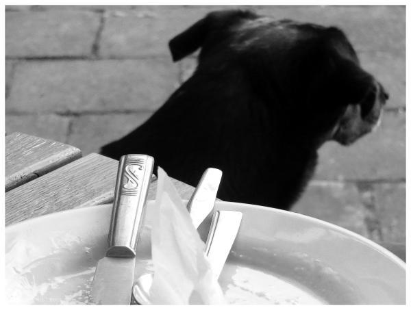Dog & Ex-pancakes