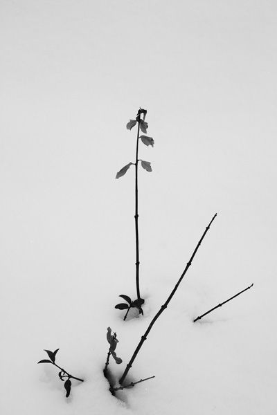 plant & snow