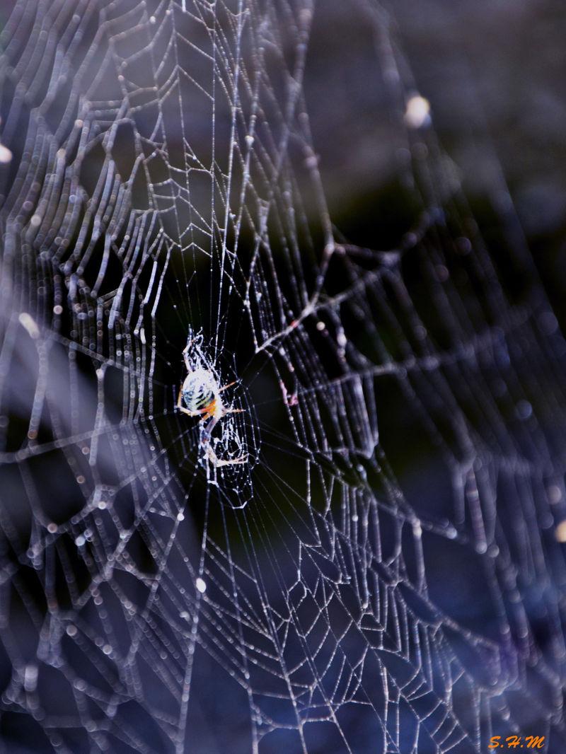 stalking spider