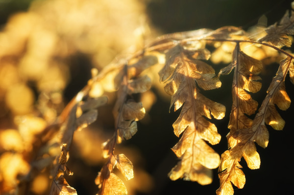 Dying fern leaves.