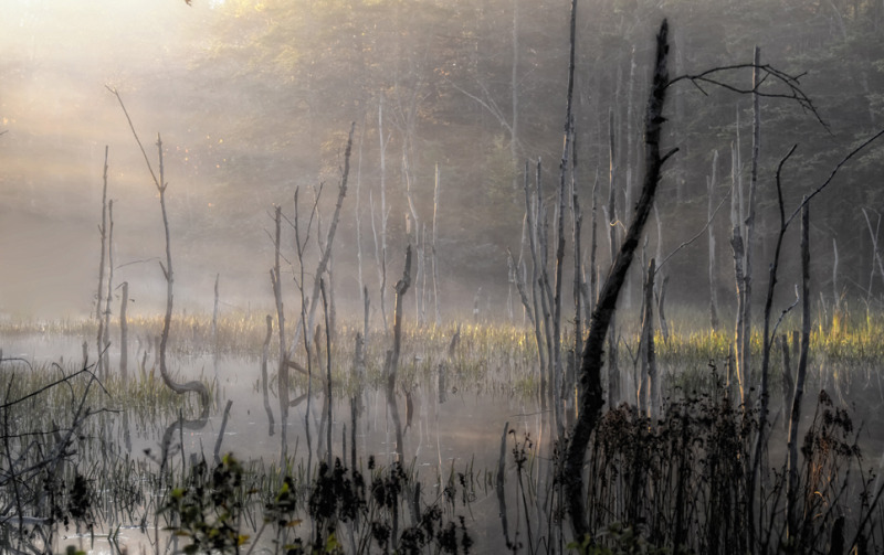 Fog and marsh
