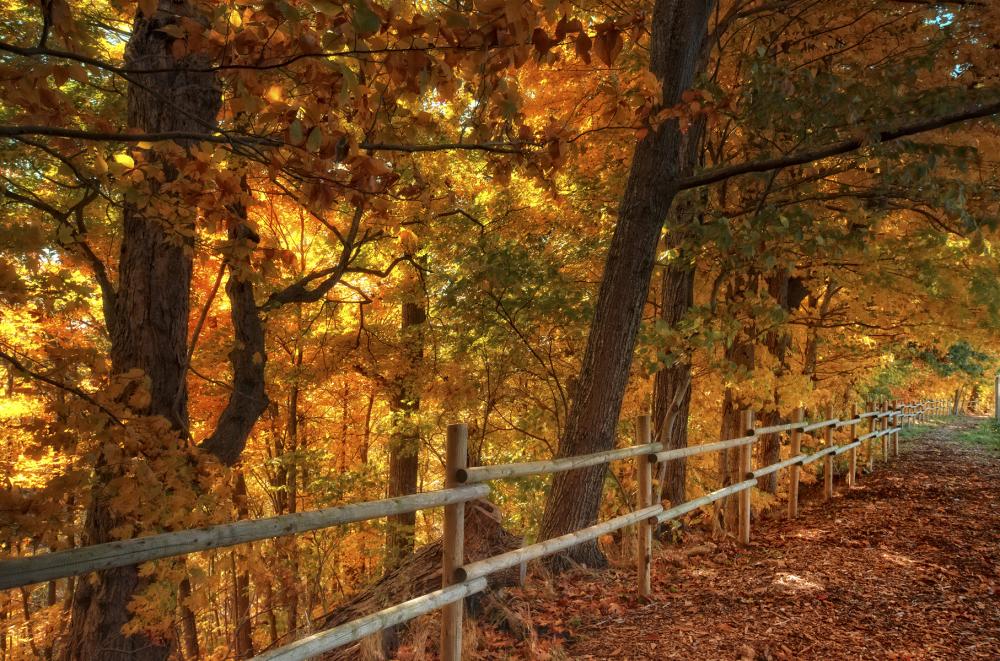 Autumn path II