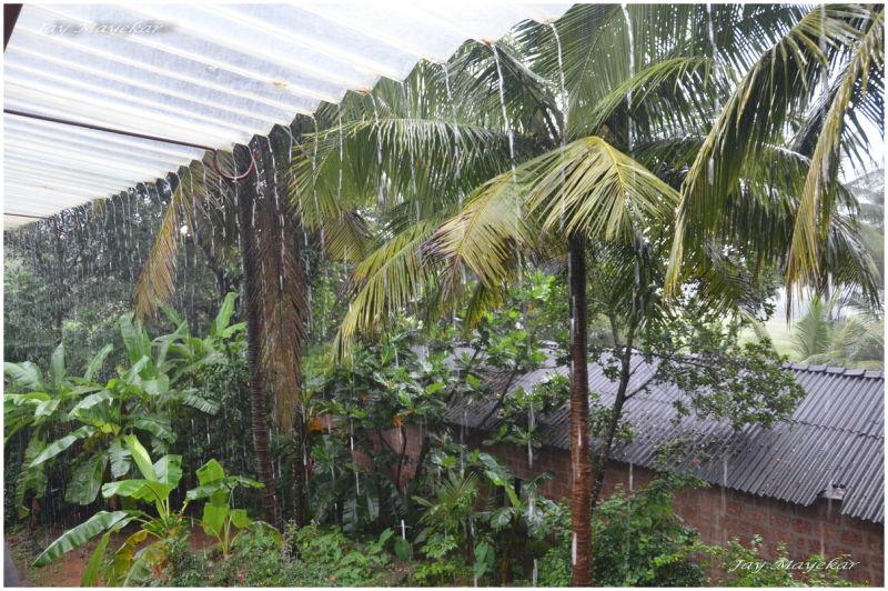 Curtains Of Rains