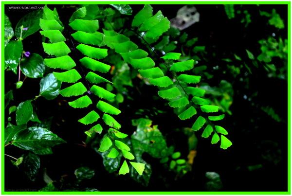 Jay Mayekar Green Leaves