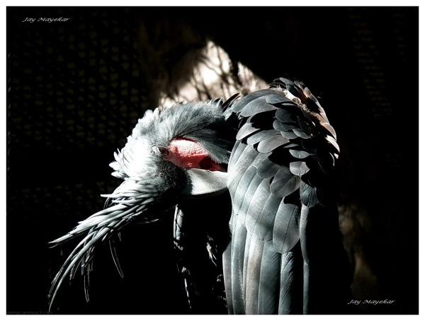 Jay Mayekar Gray Parrot Caged Bird