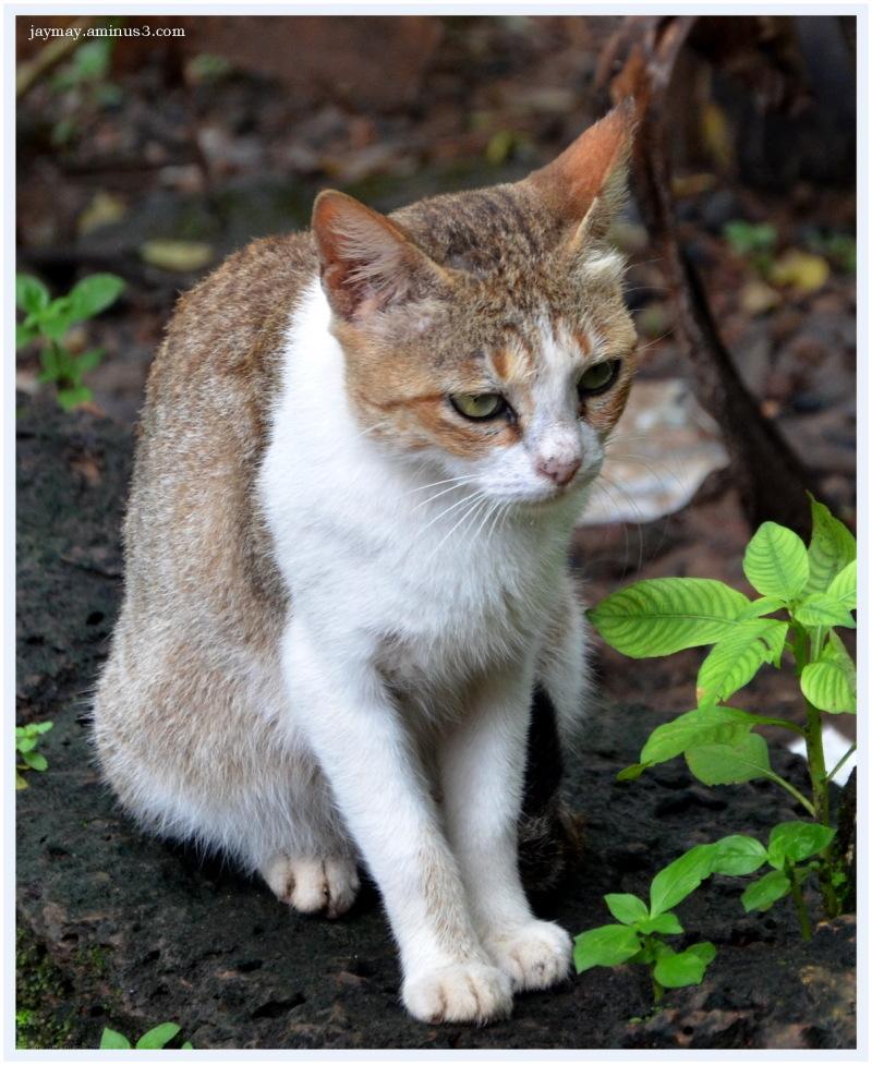 Jay Mayekar Cat