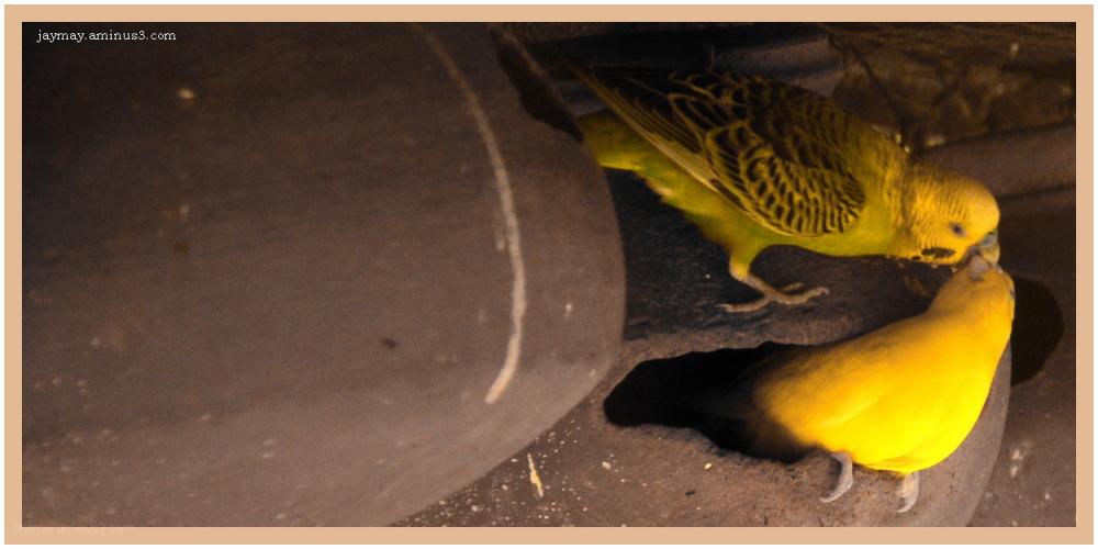 Jay Mayekar, Birds, Valetine's Day