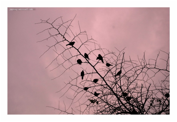 ' Evening Silhouette '