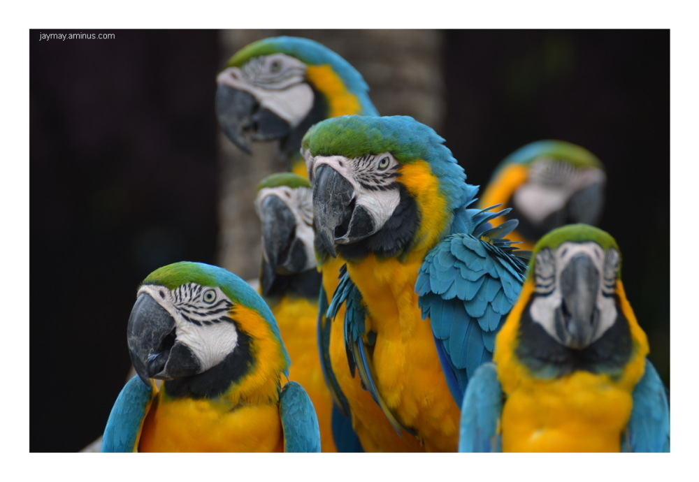 Handsome Birds