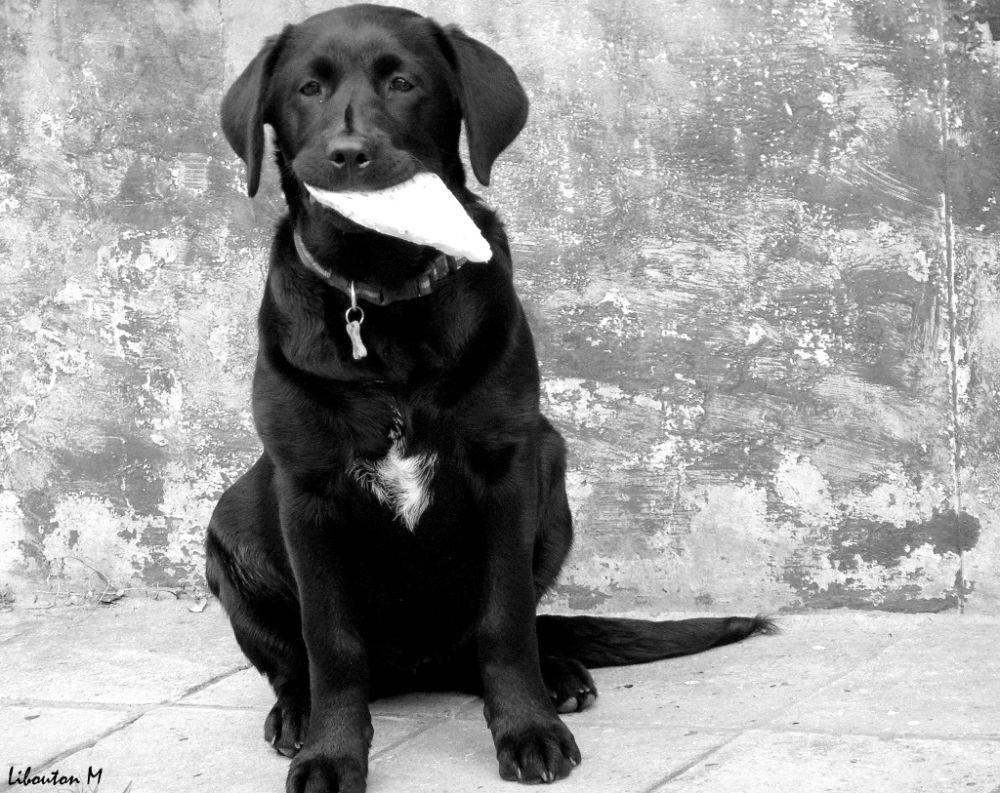 Le chien à la tartine