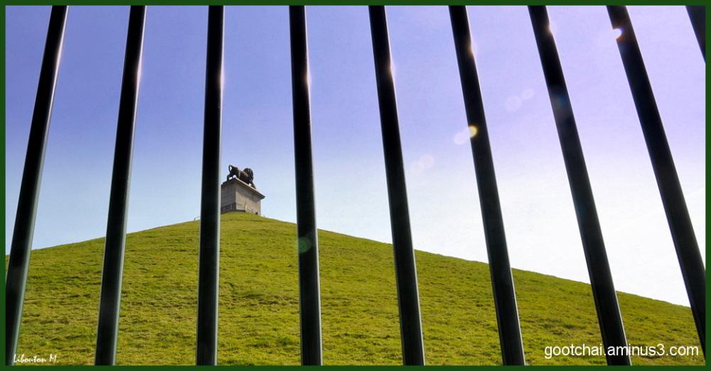 Lion en cage....